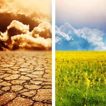 Développement de l'agriculture des régions chaudes