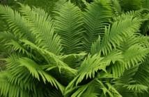 master écologie tropicale