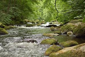 Licence pro Forêts, gestion et préservation de la ressource en eau