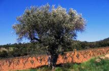 licence agriculture intégrée