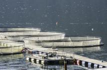Formation aquaculture pisciculture