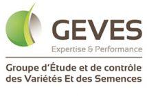 Geves