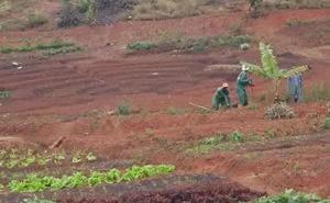 projet agro-écologique Beleaf à Madagascar