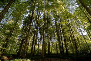 devenir ingénieur forestier