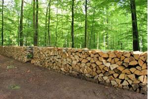 devenir technicien forestier