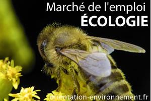 marché de l'emploi en écologie