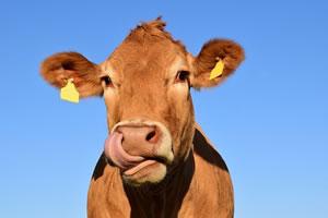offre d'emploi vacher