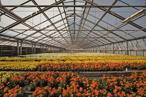 Master Filières de l'horticulture et innovations