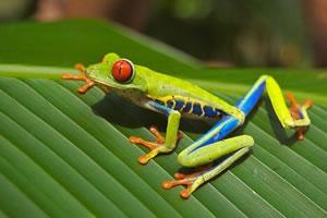 herpétologie etude des amphibiens